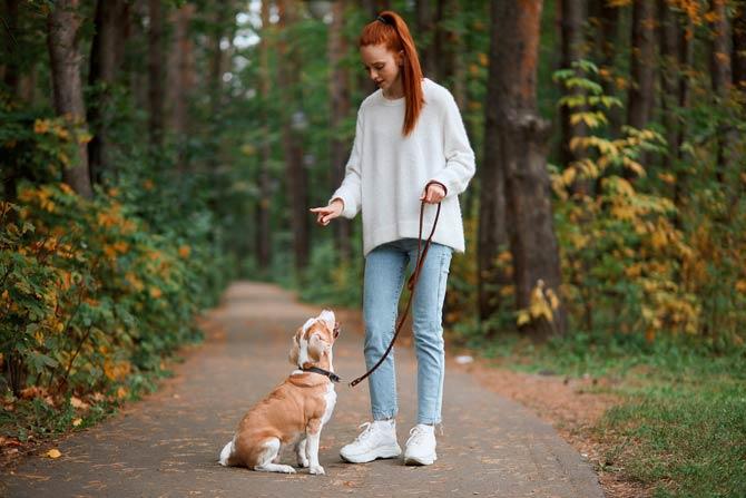 Regelmäßiges Training Ihres Hundes