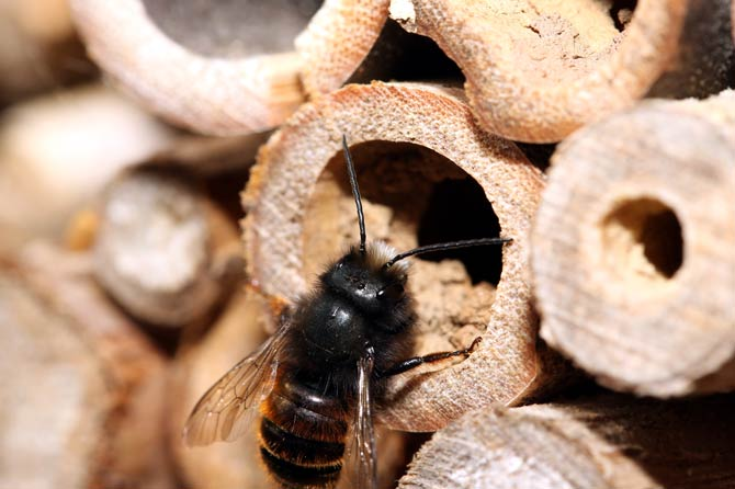 Schilfhalm - Insektenhotel