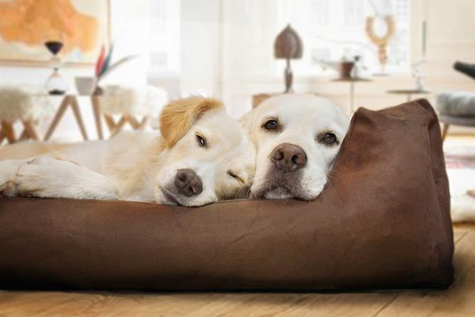 Schlafrituale von Hunden