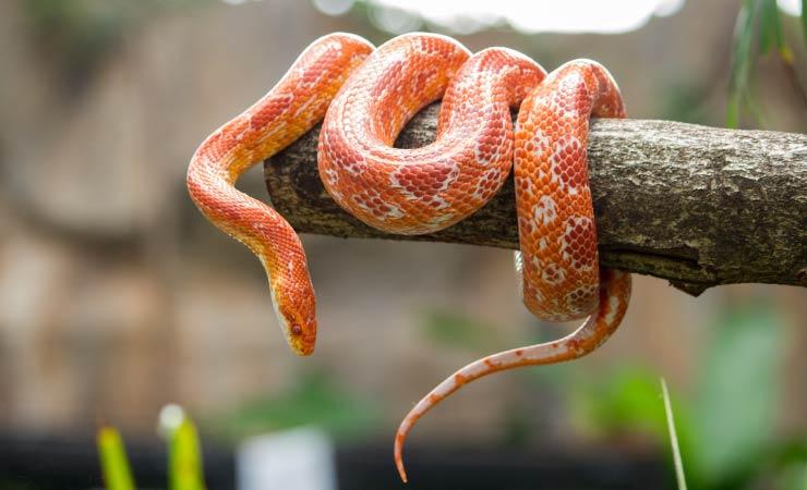 Schlangen als Haustier halten