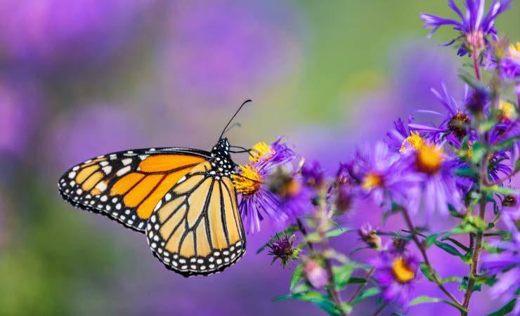 Ernährung von Schmetterlingen