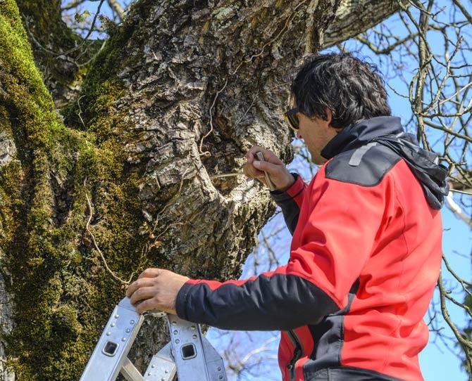 Sicherheitsprüfung am Baum
