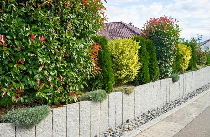 Sträucher und Hecken als Gartenumrahmung