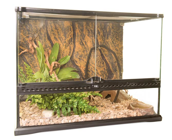 Terrarium aus Glas