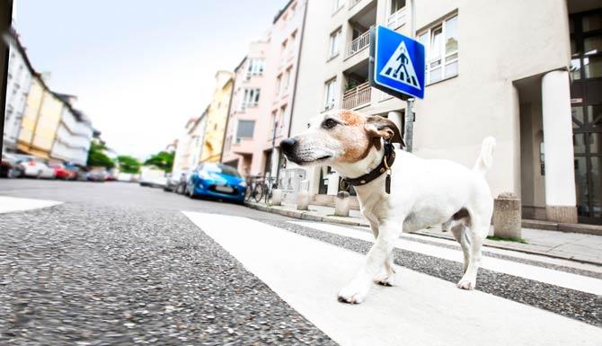 Tier überquert Straße