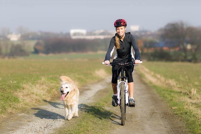 Tiere ans Fahrrad gewöhnen
