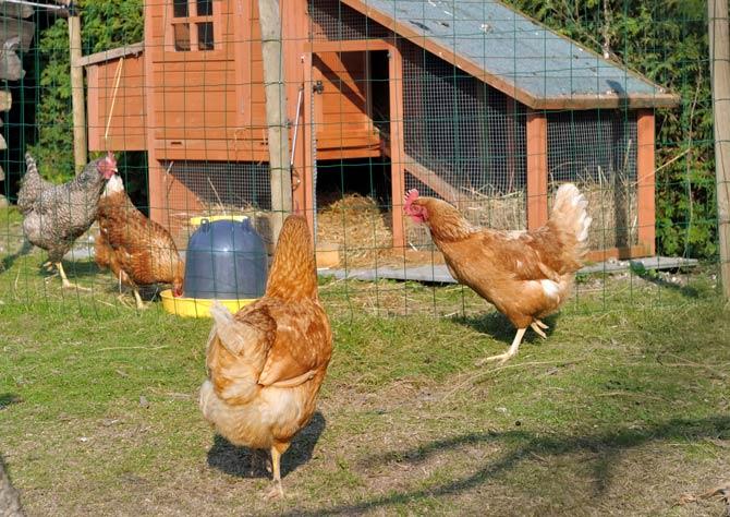 Tierhaltung in Wohngegenden