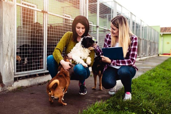 Tierheime - Vermittlungsstopp um die Feiertage