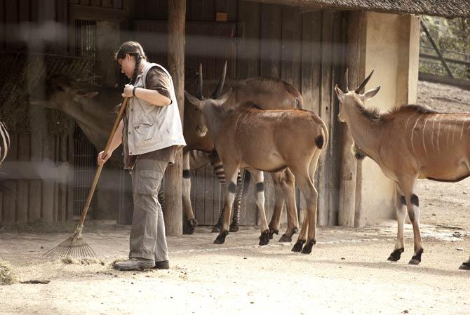 Tierpfleger im Zoo