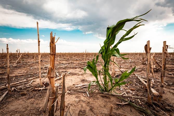 Trockenperioden durch Klimawandel