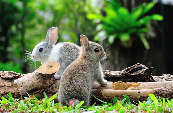 Ursachen für Aggressionen bei Kaninchen