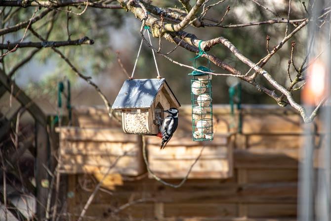 Vögel regelmäßig füttern