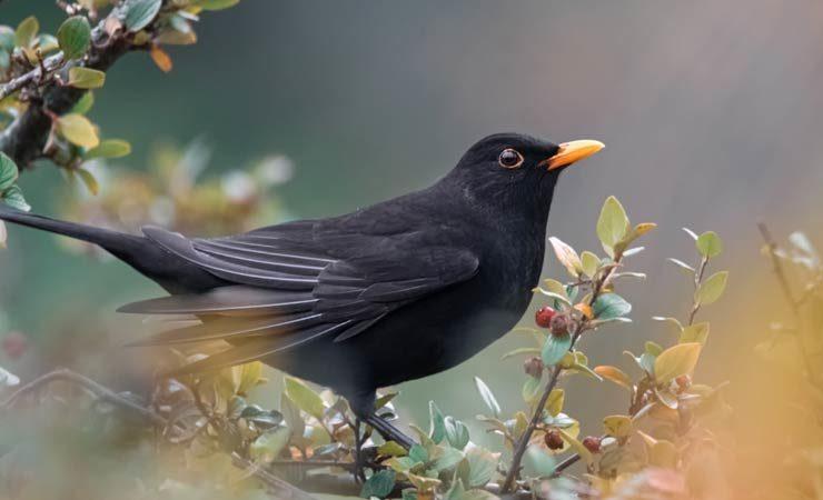 Vollzieht sich in Deutschland ein Vogelsterben?