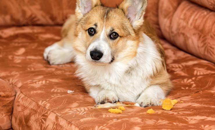 Warum kratzen die meisten Hunde an ihren Betten?