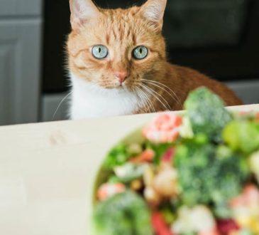 Was dürfen Katzen nicht essen