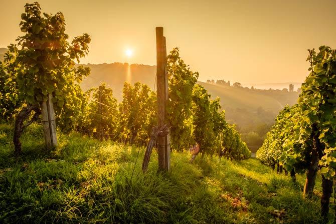 Da einige Rebsorten nicht gut auf flachen Ebenen gedeihen, müssen spezielle Weinsorten an Hängen angebaut werden