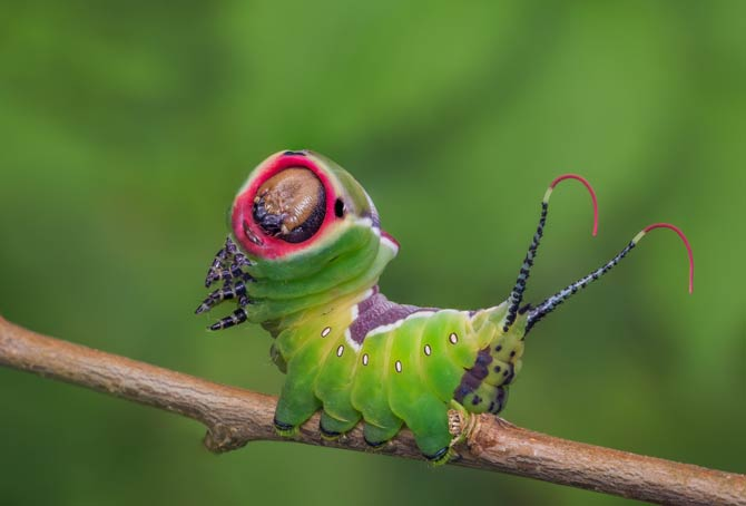 Wirbelloses Tier