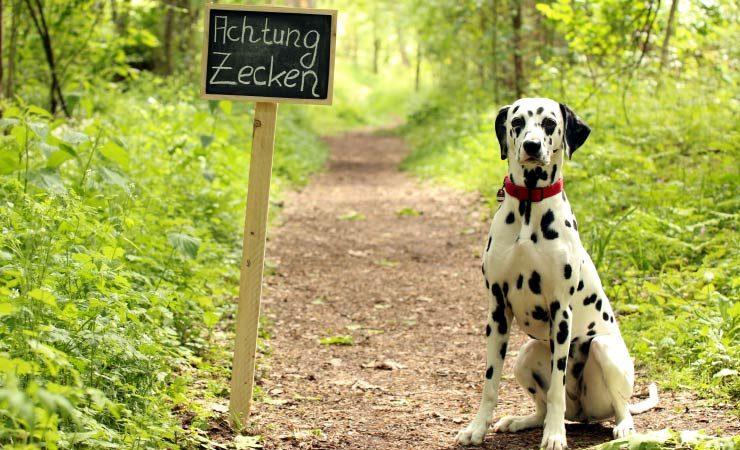 Zeckenbisse bei Hunden