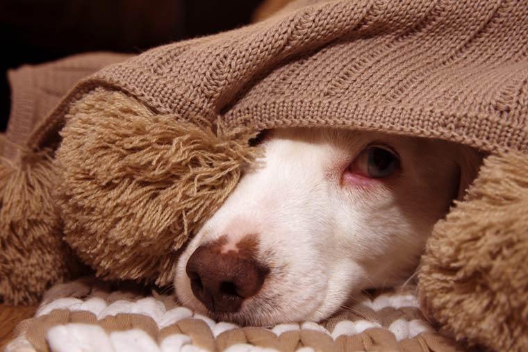 Freiwillig isolieren - Trennungsangst bei Hunden